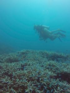 PADI Discovery Dive