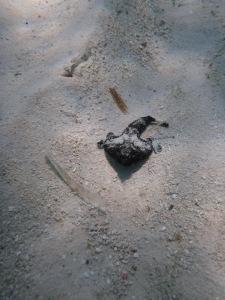 Bat Fish