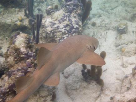 Reef Friends