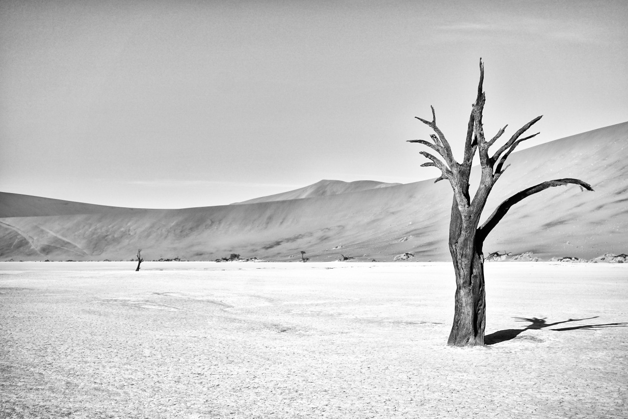 Two Trees – Deadvlei