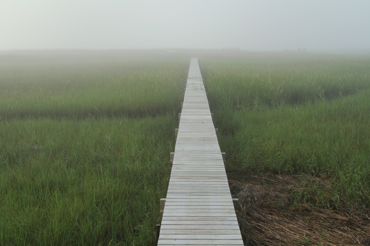 Salt Marsh at Dawn – Cape Cod