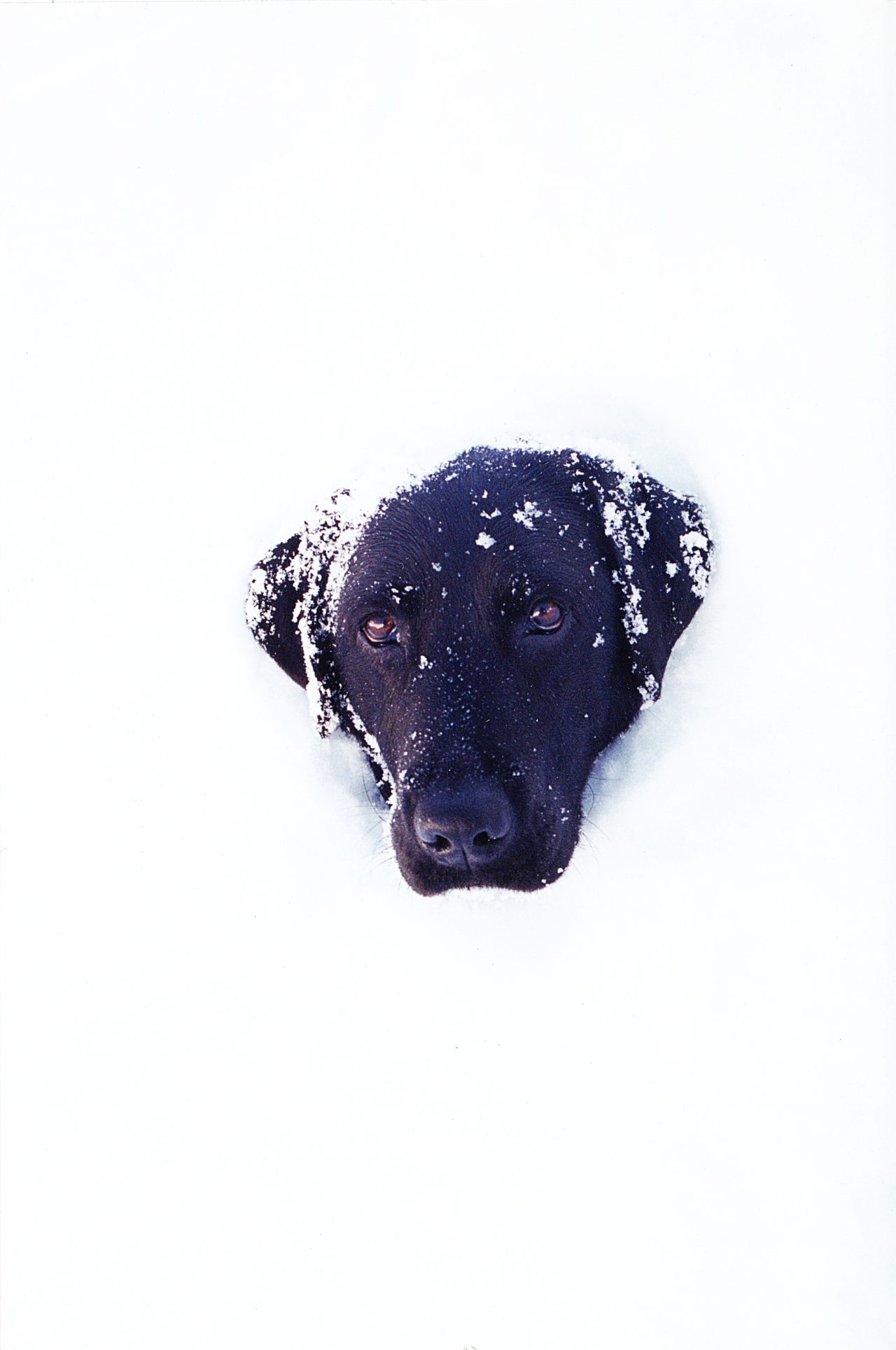 Tess in Snow_1
