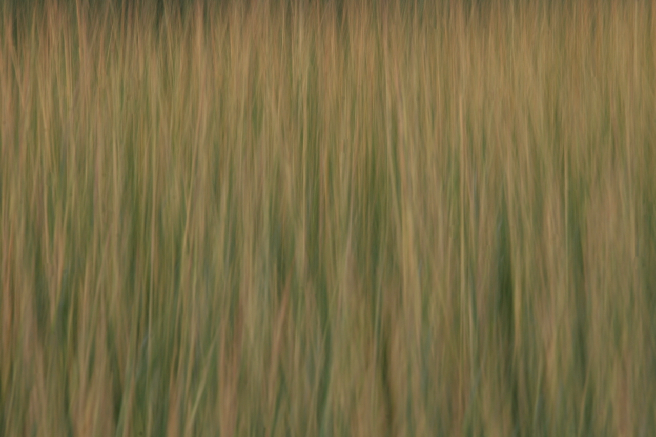Cape Cod Abstract