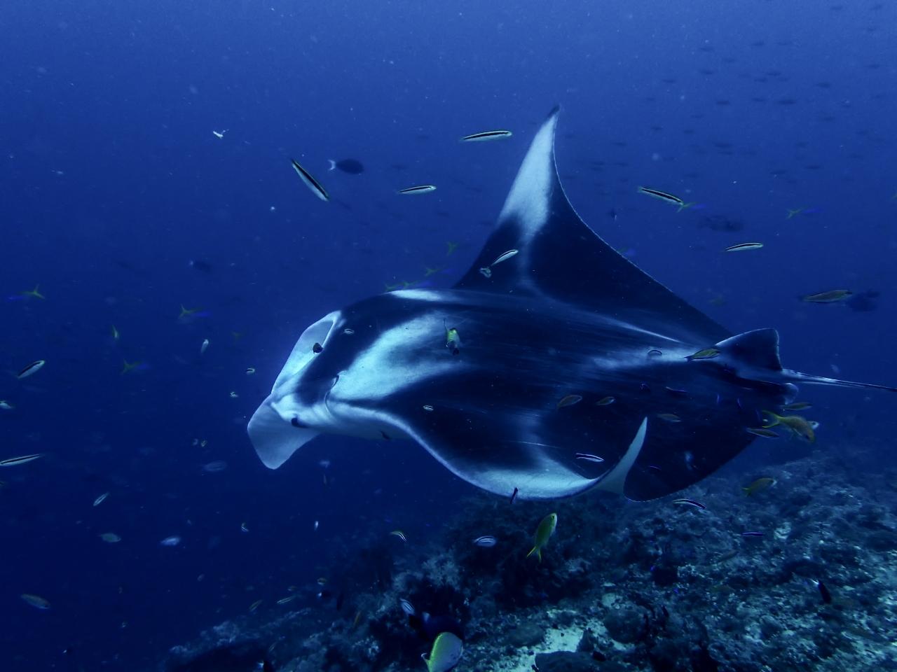 Diving the Pristine Depths of RajaAmpat